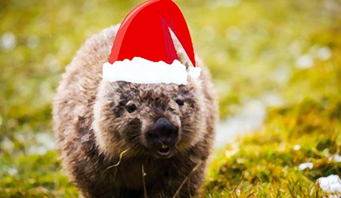 Xmas wombat.jpg