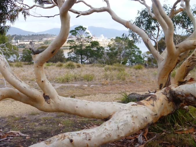 Sitting tree.png